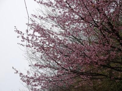 高山市奥飛騨温泉郷新穂高温泉深山荘山桜