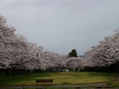 高山市宮川緑地公園